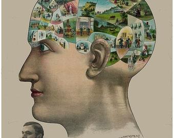 antique victorian illustration anatomical print skull digital download medecine