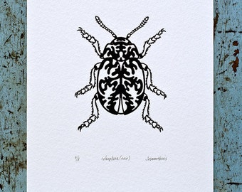 Beetle / Coleoptera 'specimen' (noir) - Limited edition one-colour screenprint