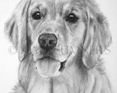 Golden Retriever Art Print of Drawing 8x10 Golden Dog Art