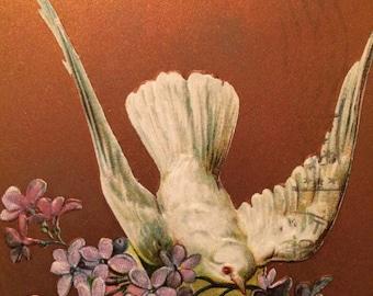 Victorian Postcard - Dove - Lilacs -Bird