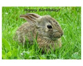 Happy Birthday, Birthday, Birthday Card, Rabbit, Baby Bunny, Bunny, Greeting Card, Stationary, Photo Notecard, Photography, Spring, Green