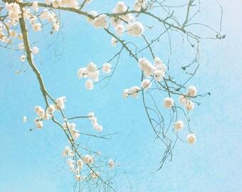 Cherry Blossoms Photograph, Pink Flowering Tree Print, Pastel Blue Pink Aqua Wall Art, Dreamy Modern Botanical Art 8x10