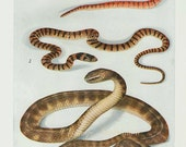 1912 Antique lithograph of SNAKES XLV reptile  life 100 years old bookplates, print