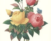 Flower Print Botanical Art, Redoute Rose, Vintage Flower Wall Decor No. 127