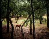 Extra Large Wall Art-Deer in the Woods-Central Texas-Forrest-Fine Art Travel-Photography-20x30