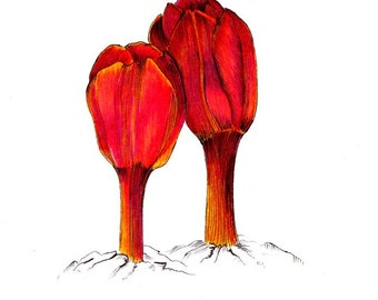 """Surfacing tulips art print of an original drawing available 5x7"""" or 8x10"""""""