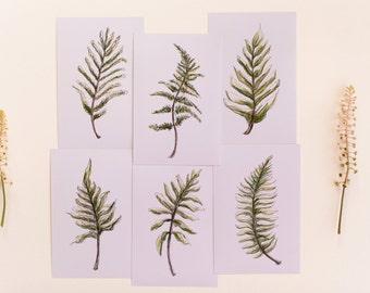 Set of 6 Fern Prints, Botanical