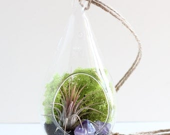 Air Plant Terrarium Kit with Amethyst Crystal Points and Black Sand - Teardrop Hanging Terrarium