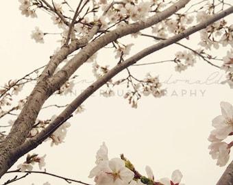 DMZ Cherry Blossoms - Photographic Print - North, South, Korea, wanderlust,  travel, Art, Decor,cherry blossom, Photography, asia, asian,