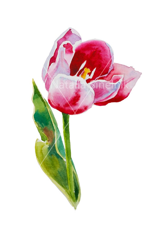 Pink tulip digital download original watercolor isolated on white background, cottage chic style painting floral clipart