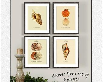 Sea Shell Prints, Set of 4, Beach Decor, Ocean Prints, 8x10 Print sets, Vintage Nautical prints