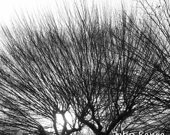 Photo print:  Trees in Barcelona. Shade photography.