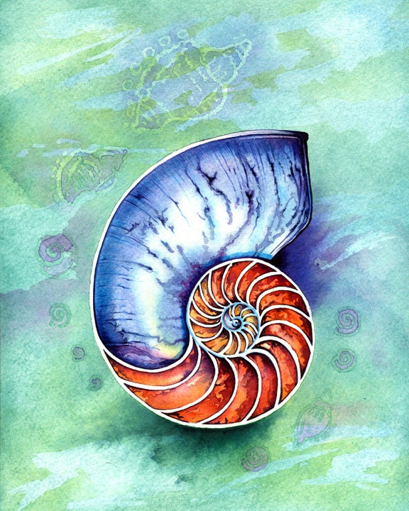 nautilus muschel aquarell illustrationen art print poster. Black Bedroom Furniture Sets. Home Design Ideas