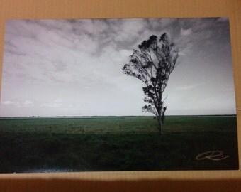 "Photo: Lone Tree, Uruguay (18"" x 12"" print) (front signature)"