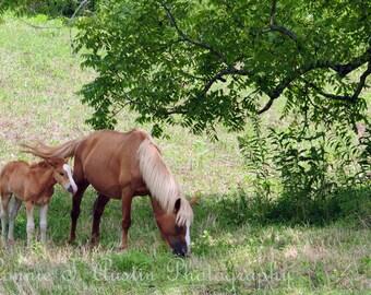 Fine Art Photography Card-Fine Art Photograph-Horse Card-Horse Photograph-Horses-Mare and foal-Landscape-Kentucky Horses-Kentucky-Nature