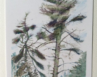 Weathered old pines Maine Island Watercolor Print, blank note cards 5 x 7 with (A7) envelope