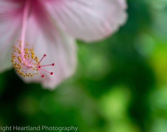 Large Print Hibiscus, Large Macro Photo, Nature Photography, Tropical Flower, Flower Print, Large Wall Art, Pink Flower, Pink Green