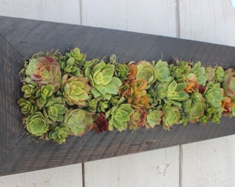 Vertical Hanging Living Wall/Succulent Planter. Awesome Gift!