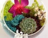 DIY Kit for Kristen Half Moon Glass Pedistal Live Succulent Terrarium w Dried Florals Wedding Shower Centerpiece