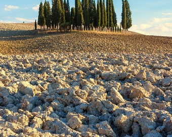 Tuscan Cypress Grove, Tuscan Countryside, Tuscany, Italy, Rustic, Cypress Trees, Farmland, Val d'Orcia - Travel Photography, Print, Wall Art