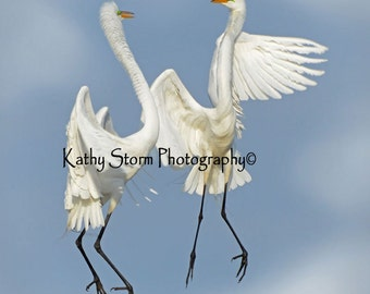 Fine art wildlife photography.   Great Egrets, Wedding or Anniversary, Three in a series of six.  Wall art, home décor.   FREE SHIPPING!