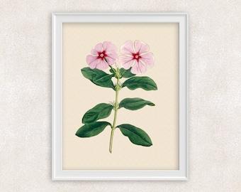 Periwinkle Botanical Art Print - 8x10 PRINT - Pink Flower Print - Garden Prints - Illustration - Poster - Victorian Art - Item #156