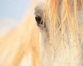 Beautiful horse's face during The Golden Hour