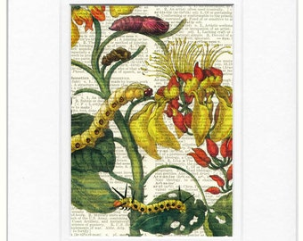 caterpillars and flowers print