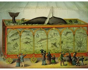 antique victorian traveling aquarium circus whale illustration DIGITAL DOWNLOAD