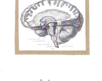 I Lobe You Card | Funny Brain Anatomy Science Pun Nerdy Geeky Psychology Medical Humor Teacher Gift Valentine Love For Him Doctor Nurse