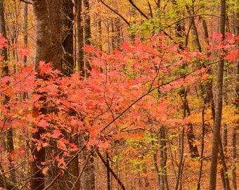 Autumn leaves inthe South Carolina Mountains