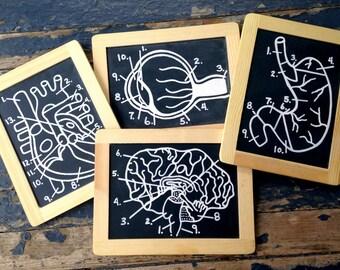 Human Anatomy Diagram Chalkboard Set Back to Dorm School Geek Science