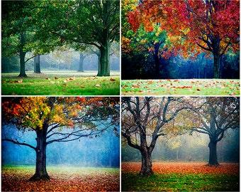 Colorful Nature Photos, Fall Photography, Autumn Landscape Set, Colorful Landscape Photography, Fall Foliage, Tree Photos, Blue, Fog, Woods