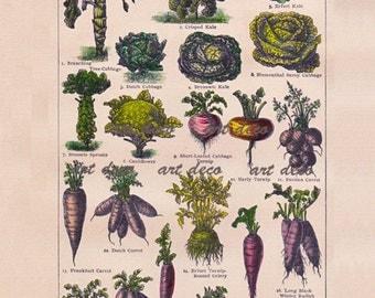 botanical print of vegetables, digital download, printable image no. 645