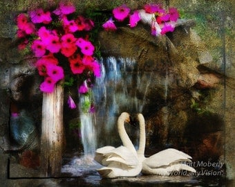 fine art print swans and pansies