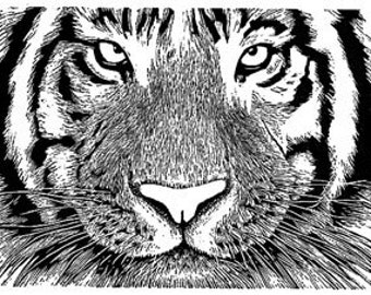 Tiger wood engraving print
