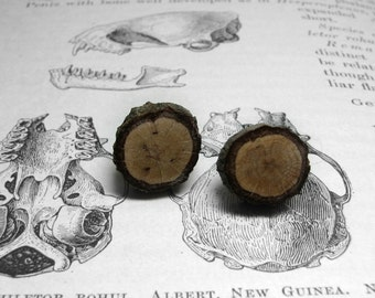 Geeky Woodland Oak Rustic Twig Wooden Stud Earrings by Tanja Sova