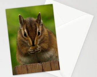 Chipmunk Card Set Woodland Creature Forest Creature Natural History Green Brown Chipmunk Magical Forest