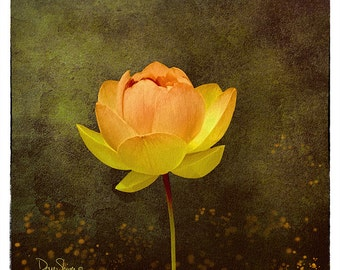 Above the Rest (Botanical, nature, lilly, golds and browns, watercolor, plants, water, Wall Decor)