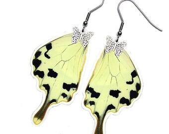 Real Butterfly Wing Earrings (Dardanus HW - E120)