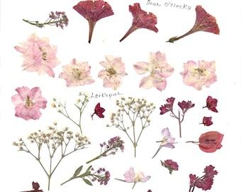Original digital clip art pink and red flowers.