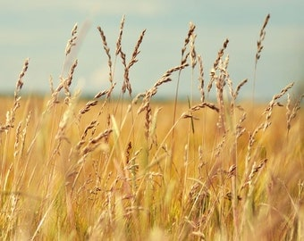 Summer photography. Nature. Field. Fine art photography print. 8x8 (20x 20cm)