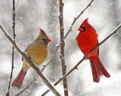 25 Greeting Cards Snowy Cardinals Male & Female Art Photo Christmas Holiday Cards w/ Envelopes