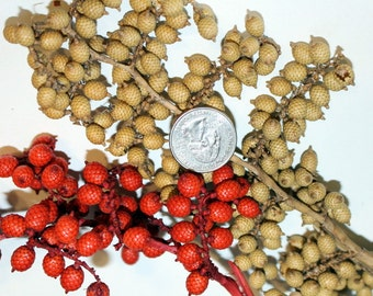 Canella Berries dried  2 Oz  on stems in 5 beautiful Colors-Green-Red-Natural-Brown-Weathered