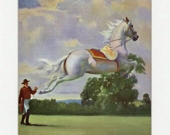 Vintage Lipizzan Horse Illustration from 1951 Album of Horses