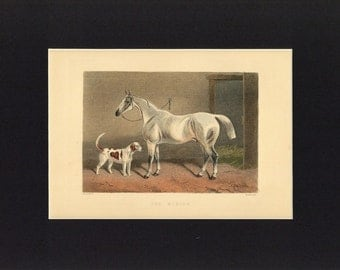 Antique 1892 Print of Fox Hunting - The Hunter