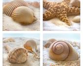Beachy Shells Print Set - Save 25% - Beach art, starfish, cockle, and whelk shells.  Bathroom decor, bathroom art, florida seashells.