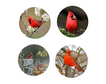 Cardinal Magnets--4 Cardinals Looking for a Home - A great gift