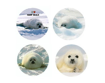 Harp Seal Magnets:  4 Baby Harp Seals for your home, your collection,  or to give as a unique gift