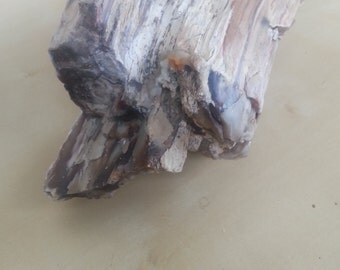 Petrified Wood Specimen Collectible Item